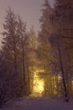 Snowy trees and yellow light Stock Photos