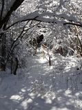 Snowy tunnel of tree branchces Stock Photography