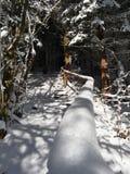 Snowy-Tunnel von Baum branchces Stockbilder