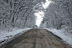 Snowy-Tunnelstraße vom Wald zum bewölkten Himmel Stockfotografie