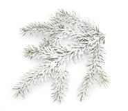 Snowy twig Stock Photo