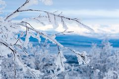 Snowy twigs. Frozen mountains and blue sky on background. Snowy twigs. Frozen blue mountains and clean sky on background stock photo