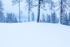 Snowy und nebelige Gebirgswinterlandschaft stockfotografie