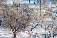 Snowy urban park in sunny winter day Stock Photos