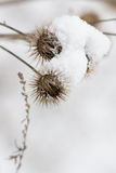 Snowy vegetation Stock Photography