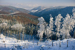 Snowy view Royalty Free Stock Photo
