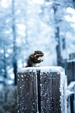 A snowy view of xiling snow muntain stock photo