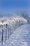 Snowy vineyards. Winter view of vineyards near Rocca de' Giorgi, Oltrepò Pavese, Italy stock photos