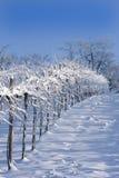 Snowy vineyards Stock Photos