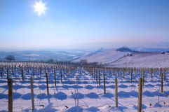 Snowy vineyards. Piedmont, Italy. Stock Photo