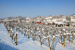 Snowy vineyards. Piedmont, Italy. Stock Photo