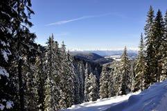 Snowy-Wald 1 Lizenzfreies Stockfoto