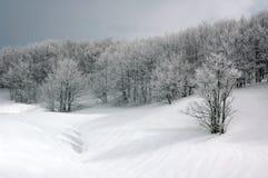 Snowy-Wald. Lizenzfreie Stockfotos