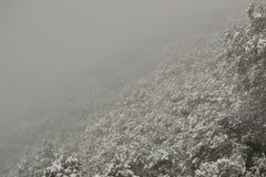 Snowy-Wald Stockbilder