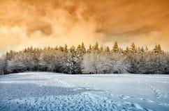 Snowy-Wald Lizenzfreie Stockbilder