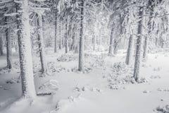 Snowy-Wald Lizenzfreies Stockbild