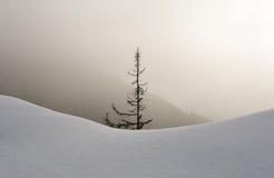 Snowy-Wald im Nebel Stockbild