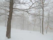 Snowy-Wald im Nebel Stockfotos