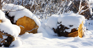 Snowy-Wald im Sonnenschein und im Brennholz Stockbild