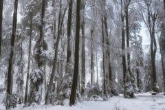 Snowy-Wald im Winter Lizenzfreie Stockbilder