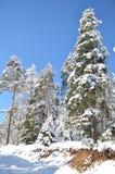 Snowy-Wald mit Tannenbäumen in den towads Wintertruthahn bilecik weiten Weges das Holz Stockbilder