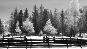 Snowy-Wald no.8 Lizenzfreie Stockfotos