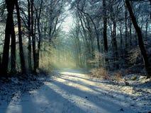 Snowy-Wald am Sonnenuntergang Lizenzfreie Stockfotografie