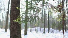 Snowy-Wald, Weihnachtsbaum, Transportwagen stock video