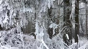 Snowy-Waldlandschaft in den Bergen von Winterberg, von Hochsauerlandkreis, von Deutschland, von Pappel und von schönem Feiertagss stock footage