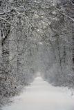 Snowy-Waldpfad Lizenzfreies Stockbild