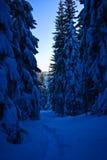 Snowy-Waldpfad stockfotografie