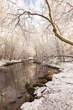 Snowy-Waldsonnenschein Stockfotografie