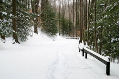 Snowy-Waldweg lizenzfreies stockbild
