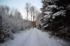 Snowy-Waldweg Stockfotos