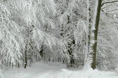 Snowy-Waldweg lizenzfreie stockfotografie