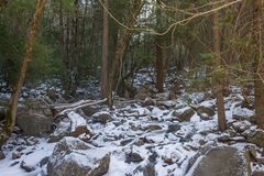 Snowy-Waldwiese in Yosemite stockfotos