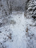 Snowy Walk Stock Photos