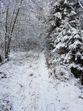 A snowy Walk Royalty Free Stock Image