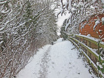 Snow walk through the trees. Royalty Free Stock Images