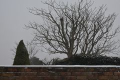 Snowy Wall with Trees in Background stock photography