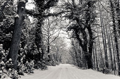 The snowy way Stock Photo