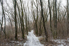 Snowy way between trees in the dark winter forest Stock Photos