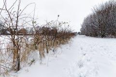 Snowy-Weg durch den Park Lizenzfreies Stockfoto