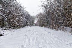 Snowy-Weg durch den Park Lizenzfreies Stockbild