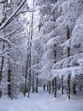 Snowy-Weg durch den Wald stockfoto