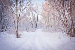 Snowy-Weg durch die Bäume Lizenzfreie Stockbilder