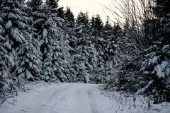 Snowy-Weg im Maine-Nordholz Stockfotos