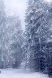 Snowy-Weg im Wald Stockbild
