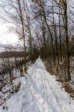 Snowy-Weg im Wald Lizenzfreies Stockbild