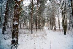 Snowy-Weg im Winterwald Lizenzfreies Stockbild